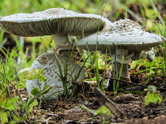 Room at the Mushrooms (clarkcg photography) Tags: mushrooms ring tree forest web nature fungi anythinggoesmonday freethememonday 7dwf