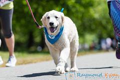 2018Furry5K_600_4357 (Raymond Kwan Photography) Tags: furry5k animal shelter dog puppy charity sewardpark 2018 5k run furry