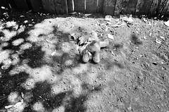 My Brother's Backyard (STREET MASTER) Tags: banal blackwhite blackandwhite candid candidstreet candidstreetphotography chrisricheyphotography dallasstreetphotographer dallasstreetphotography dallastexas environment foundobject moblehome photoshotbychrisrichey stilllife garland texas toy teddy bear decay abandon foundobjects