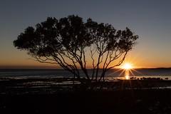 Moreton Bay Dawn (nielsen_tony) Tags: dawn 6dii cannon tranquility brisbane peace day new sunrise bay moreton