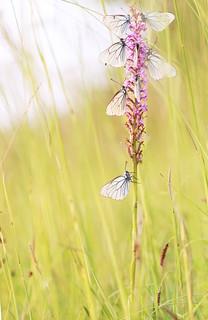 Hôtel pour papillons