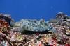 Turtles (Petter Thorden) Tags: diving indonesia gili trawangan underwater turtle