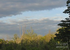 A break in the clouds (Aliceheartphoto) Tags: photography sky clouds bluesky weather trees nature naturephotography sony cybershot cincinnatiphotography cincinnati ohio