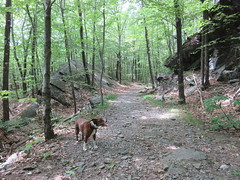 Hailey Waiting For The Humans (amyboemig) Tags: rock ledge wantastiquet mountain mount ham hike hiking june spring summer