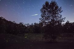 Firefly Nights (Tim Drivas) Tags: night fireflies firefly outdoors longexposure stars startrails trees newyork summer forest nature