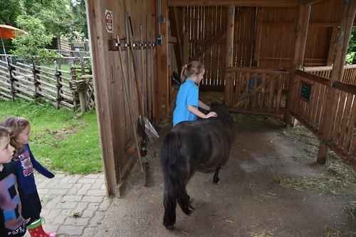 Die Ponies kommen auf die Koppel