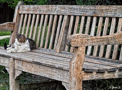Don't disturb (Jean S..) Tags: animal cat bench park garden lazy outdoors sleep cute soft