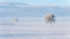Winter 2 (lotte0815) Tags: winter landschaft baum bäume schnee kalt morgen nebel dunst licht