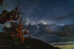 Bristlecone Pine (halladaybill) Tags: nightshot bristleconepineforest nightlandscape starlight