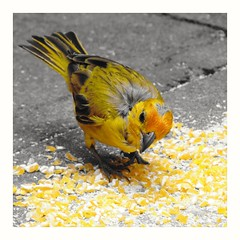 Oye lo que no tiene sonido y ve lo que no tiene forma... (Sury Dayanna) Tags: beautiful bird beauty nature amazing inspiration capture emotions picture serenity photography photo photograph photographie fotografie fotografía momentos naturaleza ave love zen natura natur goodvibes pajaro pajarito pájaro
