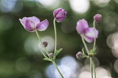Fleurs (Dakysto94) Tags: nature proxi proxy proxiphoto macro fleur flower france paris