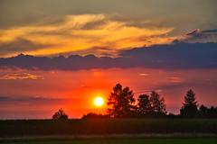 A summer sunset (echumachenco) Tags: sunset sky evening sun colors red pink orange yellow cloud sundown tree field rural landscape outdoor july summer freilassing hofham berchtesgadenerland bavaria bayern germany deutschland nikond3100 grass maize corn fence