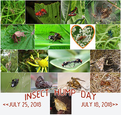 IHD Weekly Division Marker - 07/25/2018 (DarkOnus) Tags: insect hump day wednesday collage marker weekly division divider ihd hihd