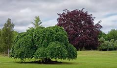 Heimarnes 50 mm (roar_vangdal) Tags: summer arendal norway hisøy trees