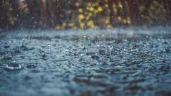 Rainy days and... (Kathy M photography) Tags: rain rainy rainyday macro macrophotography macrolens kathymphotography water sony sonyalpha ff rainydaysand flickrfridays