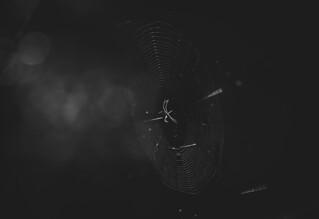 Hidden in the dark.