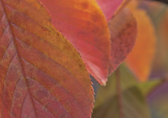 fall color (Mark Chandler Photography) Tags: 7dmarkii douglasville ga georgia markchandler canon color colour photo photography stock fall autumn leaves leaf bokeh orange red nature flora tree