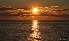 SUNSET OVER  ST. LAWRENCE RIVER  |   REFORD GARDENS   | LES JARDINS DE METIS  |  COUCHER DE SOLEIL  |   GASPESIE  |  QUEBEC   |  CANADA (C C Gosselin) Tags: sunset over st lawrence river | reford gardens gaspesie quebec canada sainte flavie canon 7d 7dmarkii rebel t2i canonrebelt2i eos canon7d markii rebelt2i canonrebel canont2i eost2i eos7d eos7dmarkii mark 2 mark2 eos7dmark2 canon7dmarkii ii canoneosrebelt2i canoneos7d canoneos ph:camera=canon coucher de soleil coucherdesoleil les jardins metis