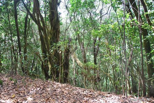 Національний парк Гарахонай, Гомера, Канарські острови  InterNetri  0734