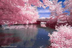 Time to Reflect (Brian M Hale) Tags: riverbend river bend farm uxbridge ma mass massachusetts newengland new england usa outside outdoors nature water reflection bridge pink blue 590nm 590 ir infra red infrared brian hale brianhalephoto