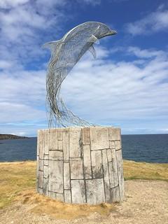 A 'lively dolphin' enjoying the Scottish sunshine.