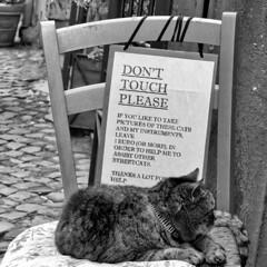 don't touch please (Bim Bom) Tags: cat gatto rome roma bw roma20185l