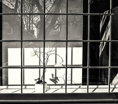 Winter Gallery--Mono (PAJ880) Tags: gallery february winter provincetown ma commercial st mono bw