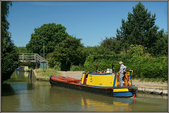 DODONA, Norton Junction (Jason 87030) Tags: narrowboat yellow liecesterline nortonjunction guc cut grandunioncanal boat dog jack man event show rally 2018 braunston historic color colour sunny weather water towpath journey