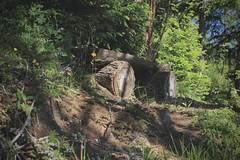 petit banc ombragé (bulbocode909) Tags: valais suisse ovronnaz montagnes nature bancs forêts arbres fleurs vert jaune