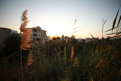 Before Sunset (26) (Polis Poliviou) Tags: nicosia lefkosia street summer capital life live polispoliviou polis poliviou πολυσ πολυβιου cyprus cyprustheallyearroundisland cyprusinyourheart yearroundisland zypern republicofcyprus κύπροσ cipro кипър chypre chipir chipre кіпр kipras ciprus cypr кипар cypern kypr ©polispoliviou2018 streetphotos europe building streetphotography urbanphotography urban heritage people mediterranean roads afternoon architecture buildings 2018 city town travel naturephotography naturephotos urbanphotos neighborhood