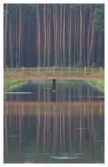 Zwierzyńczyk Kładka i sosny IMG_2622 bb (david.neville2776) Tags: zwierzyniec roztocze footbridge pines reflections water