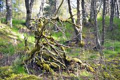 Forest Park in Glenmore, Scotland  -  (Selected by GETTY IMAGES) (DESPITE STRAIGHT LINES) Tags: nature mothernature naturalbeauty scotland nikon d800 nikond800 nikon2470mm nikkor2470mmf28 nikongp1 gps paulwilliams despitestraightlines flickr raw landscape scotlandsbeauty uk beauty beautiful island islands water loch lake highlandsofscotland thebeautyofscotland ripples land lochmorlich lochmorlichscotland aviemore badenoch strathspey glenmoreforestpark glenmoreforest glenmore getty gettyimages gettyimagesesp despitestraightlinesatgettyimages paulwilliamsatgettyimages