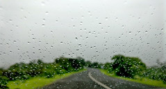 The drive :-) (Onlyshilpi) Tags: mobilephotography green rain water drops drive
