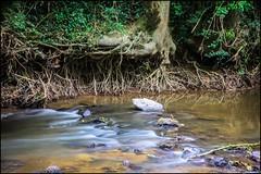 balade au bord du Vicoin 2/5 (Fotomaniak 53) Tags: pause longue rivière eau water cours deau sérinité calme campagne mayenne 53 fotomaniak53 célinel canon 550d eos raw lumineux