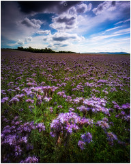 Bee Paradise (Augmented Reality Images (Getty Contributor)) Tags: nisifilters benro bluesky canon clouds countryside field flowers focusstack landscape nature perthshire scotland summer