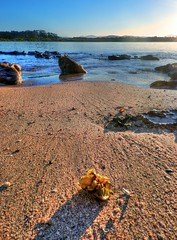 On the island XV (elphweb) Tags: hdr highdynamicrange nsw australia seaside sea ocean water beach sand sandy brouleeisland island