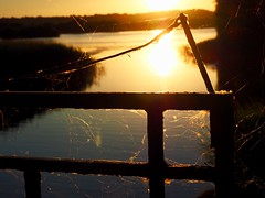 Spider Webs At Sunset (Hammerhead27) Tags: uk somerset chewvalley dusk sunset nature beauty black gold orange reflection light spider web lake water metal fence gate