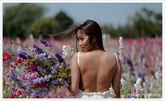 Delphinium Beauty (www.malogdenphotography.com) Tags: wick worcestershire