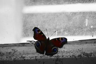 Butterfly in the Basement
