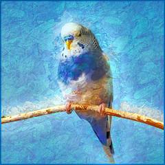 Parakeet at Brookfield Zoo (Birds&More) Tags: parakeet brookfieldzoo