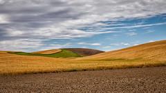 Brown, Gold, Green (D E Pabst Photography) Tags: palouse whitmancounty sky fallow soil wheat landscape cloud