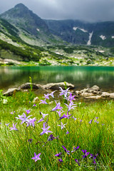 flowers near lakes (Plamen Troshev) Tags: rocks mountain landscape lake snow flowers waterfall reflection adventure new nature sky clouds 7th lakes
