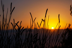 Sunset weeds (MalinaIoP) Tags: canon eos 600d sumer sunset weeds greece nature landscape macro