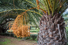 _DSC4848 (BasiaBM) Tags: botanical gardens rabat morocco