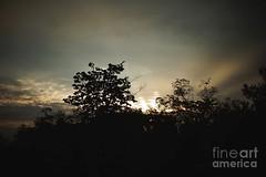 Tree with darkened sky (Aliceheartphoto) Tags: landscape nature naturephotography darksky darkness weatherphotos cincinnatiphotography cincinnati ohio sony cybershot