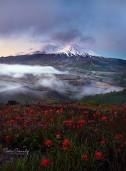 Mt St Helens in the Morning. (Mt St Helens NM, WA) (Sveta Imnadze) Tags: nature landscape foggymorning mist snow wildflowers paintbrush mtstheles mtsthelensnm wa