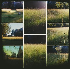 Friday, I'm in love (BedBrochFlick) Tags: graveyard sunshine uk england mmxviii light field