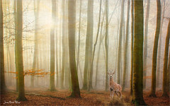 Spotted (Jean-Michel Priaux) Tags: forest trees deep light shadow sun sunset myst mist prey deer photoshop paint painting paintingmatte paintmapping matte mattepainting poetic
