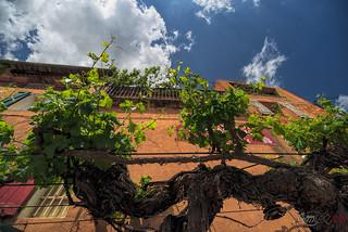 High Vineyard