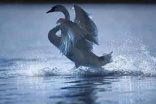 'Ice Dance'